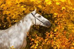 在黄色叶子的马 免版税库存照片