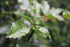 在绿色叶子的水下落。 免版税图库摄影