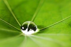 在绿色叶子的水下落 库存照片