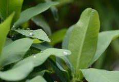 在绿色叶子的水滴秋天 免版税图库摄影