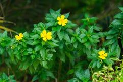 在绿色叶子背景的黄色花 库存照片