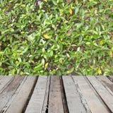 在绿色叶子自然背景的老木地板平台 库存图片