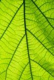 在绿色叶子表面后 库存照片