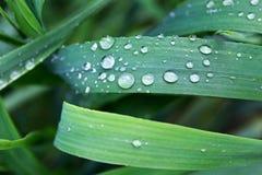 在绿色叶子,优胜美地国家公园的水下落 库存照片
