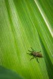 在绿色叶子,关闭的昆虫 免版税库存照片