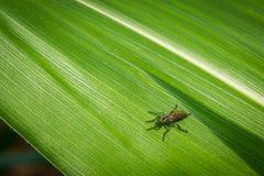 在绿色叶子,关闭的Nsect 免版税图库摄影