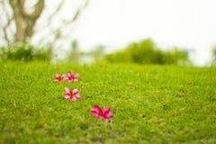 在绿色后院的红色花 库存图片