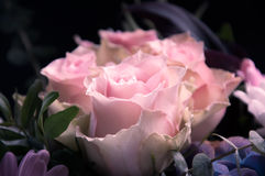 在黑色和其他花背景描出的带淡红色的玫瑰特写镜头 图库摄影