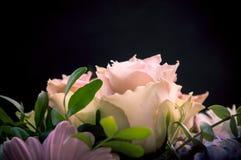 在黑色和其他花背景描出的精美浅粉红色的玫瑰特写镜头 库存图片