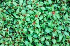 在绿色和橙色颜色的美丽的热带花 免版税库存照片