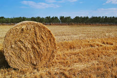 在黄色夏天领域的干草 库存照片