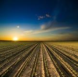 在绿色大豆的领域的日落 免版税库存图片
