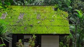 在绿色季节的青苔屋顶 免版税库存图片