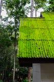 在绿色季节的青苔屋顶 库存照片