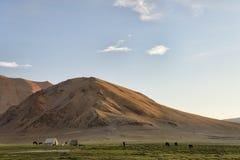 在绿色山草甸的马 免版税库存图片