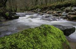 在绿色岩石 免版税库存照片