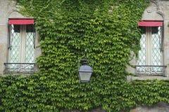 在绿色常春藤盖的城堡的窗口 免版税库存照片