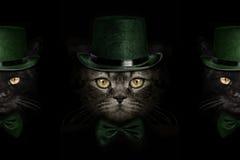 在绿色帽子和领带蝴蝶的黑暗的枪口猫 免版税图库摄影