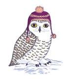 在紫色帽子的五颜六色的白色猫头鹰有绒球的 库存图片