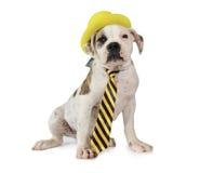 在黄色帽子的美国牛头犬小狗 免版税库存图片
