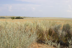 在黄色干草原背景的绿色树  免版税图库摄影