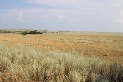 在黄色干草原背景的绿色树  库存图片