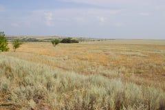 在黄色干草原背景的绿色树  免版税库存照片