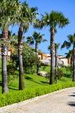 在绿色庭院的热带看法 免版税库存图片