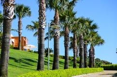在绿色庭院的热带看法 免版税库存照片