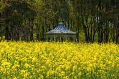 在黄色强奸花田的眺望台 库存图片