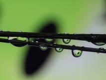 水在绿色微笑的下落反射 库存图片