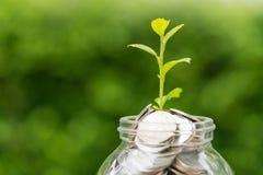 在绿色新芽植物的选择聚焦瓶子的以充分硬币 免版税库存照片