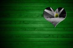 在绿色木墙壁上削减的心脏形状 库存图片