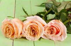 在绿色木背景的三朵新鲜的米黄玫瑰 图库摄影