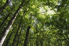 在绿色木头的树 免版税库存图片