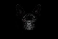 在黑色查出的狗 免版税图库摄影