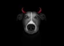 在黑色查出的狗 免版税库存图片