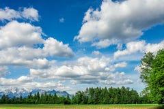 在绿色树上的美好的cloudscape 免版税图库摄影