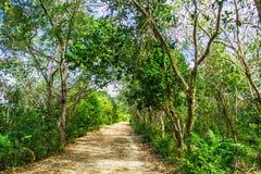 在绿色树中的土路 免版税库存图片