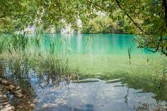在绿色树中的绿松石透明水 免版税图库摄影