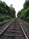 在绿色树之间的看法铁路轨道 免版税图库摄影
