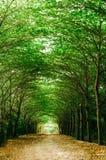 在绿色树之间的路 免版税库存照片
