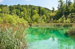 在绿色树和芦苇中的绿松石透明水 免版税库存图片