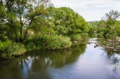 在绿色树和藤茎附近的小河河。波纹水 库存图片
