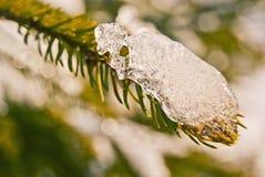 在绿色树的雪 山 库存图片
