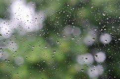 在绿色树背景玻璃和Bokeh的雨珠  免版税库存照片