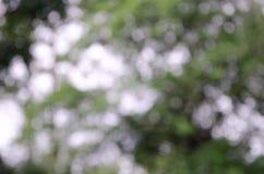 在绿色树背景玻璃和Bokeh的雨珠  免版税库存图片