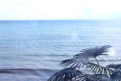 在绿色棕榈分支和海的看法通过接近的窗口 免版税库存照片