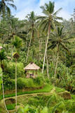 在绿色棕榈树之间的一点小屋在小山在印度尼西亚 库存图片