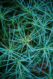 在绿色棕榈灌木的圆环 图库摄影